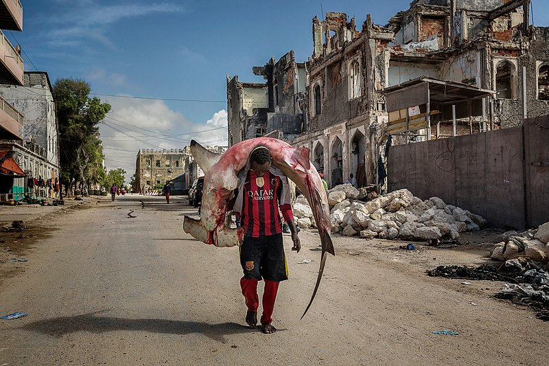 800px-A_man_carries_a_huge_hammerhead_through_the_streets_of_Mogadishu