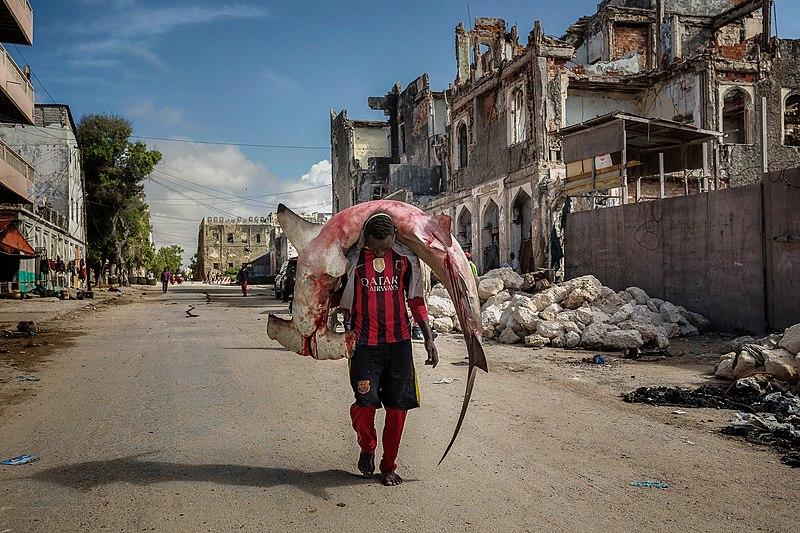 800px-A_man_carries_a_huge_hammerhead_through_the_streets_of_Mogadishu