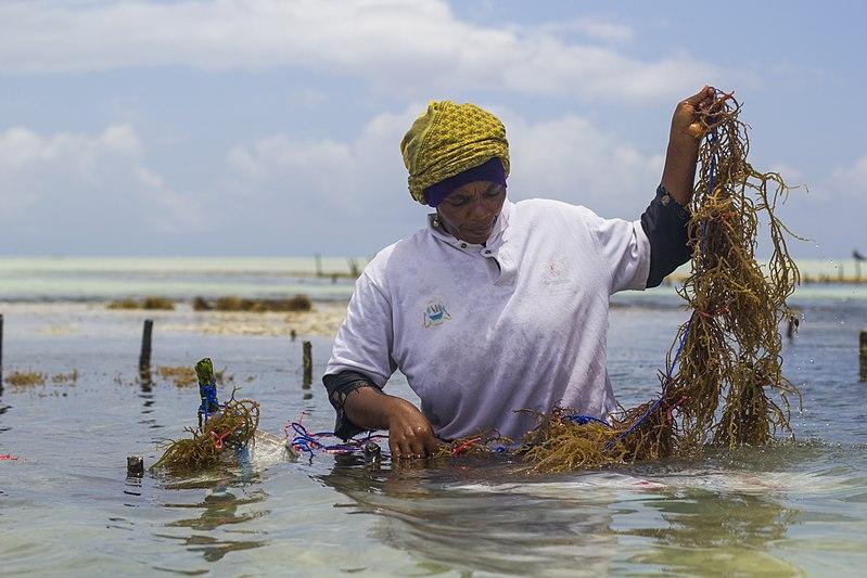 800px-WomenWorking_SeaweedZanzibar_4
